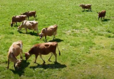 ラブリー牧場|みるく茶屋|福井県勝山市平泉寺町