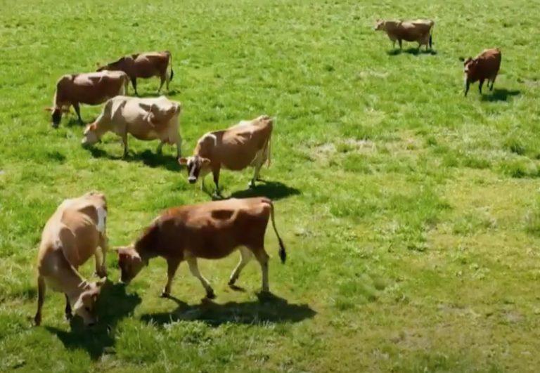 ラブリー牧場